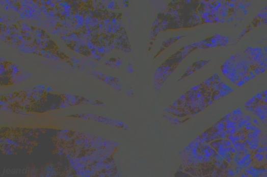 arbre123
