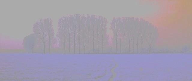 arbre23